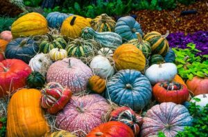 Powerful Truths of God Learned from pumpkins